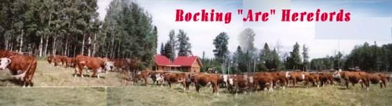 Ross Crain's Ranching Pages -- Rocking Are Herefords